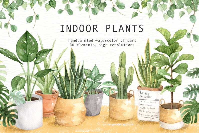 Indoor Plants Watercolor clipart Watercolour Leaves image 0