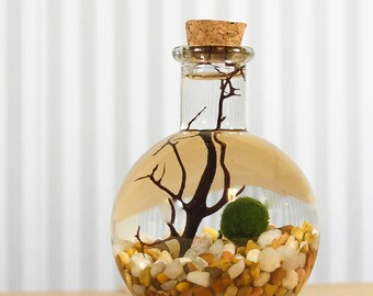 Marimo Moss ball, Japanese moss ball, Aqua terrarium,  round bottom flask, home decor