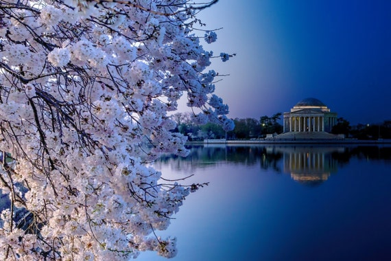 Cherry Blossoms -- Tidal Basin, Washington DC