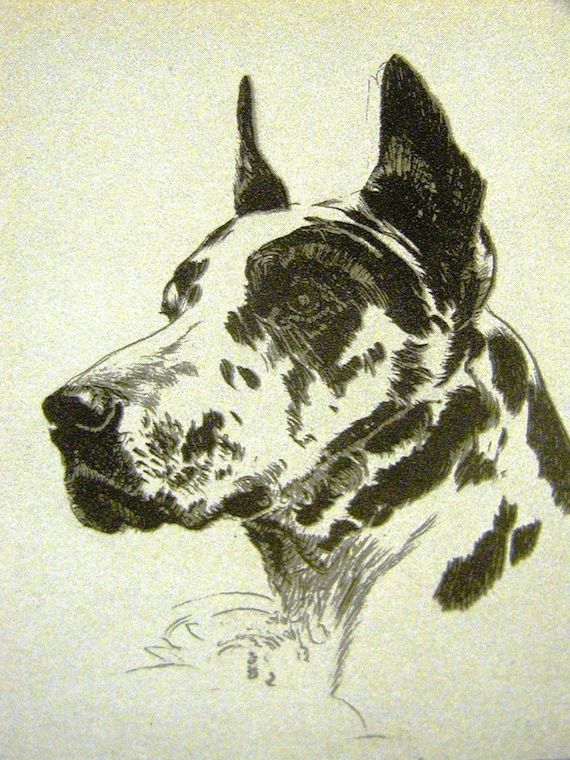 Great Dane Puppy Lucy Dawson MATTED Dog Print