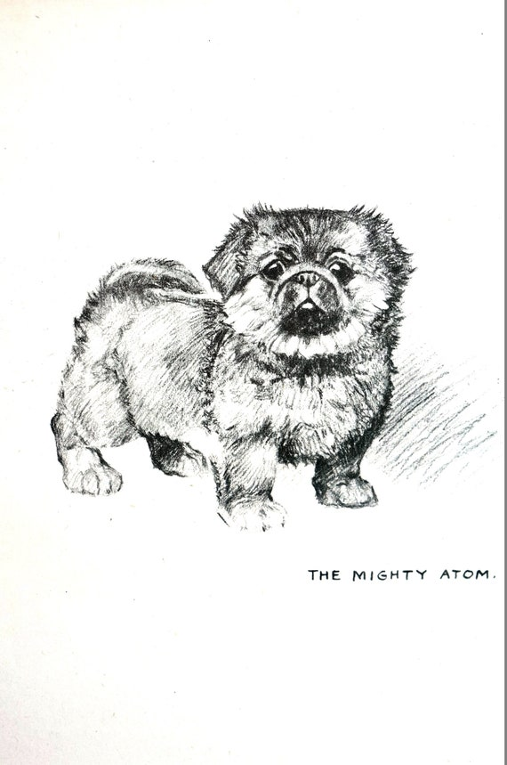 Tough Little Pekingese Puppy 1937 - MIGHTY ATOM PEKE Small Toy Dog Vintage  Just Pups Barker Print Professionally Matted Ready to Frame