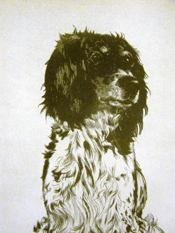 "DIANA THORNE/'S English Setter /""OLD GENTLEMAN JOE/"" 1935 Bookplate Art Print"