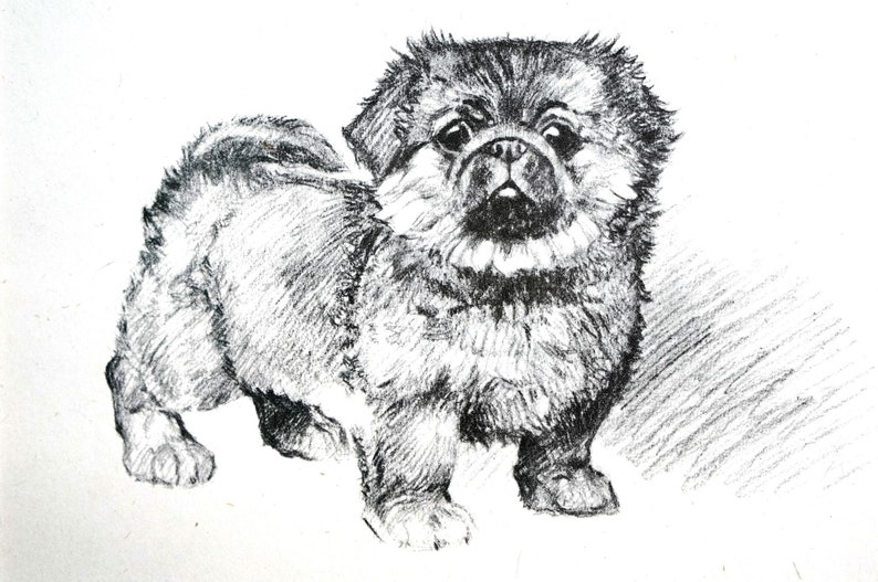 MIGHTY ATOM PEKE Small Toy Dog Vintage Just Pups Barker Print Professionally Matted Ready to Frame Tough Little Pekingese Puppy 1937