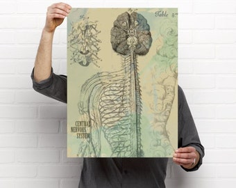 The Central Nervous System Medical Chiropractic Anatomy Artwork