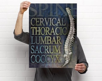 Parts of the Spine Medical Chiropractic Artwork