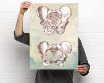 Artistic Watercolor Male and Female Pelvis