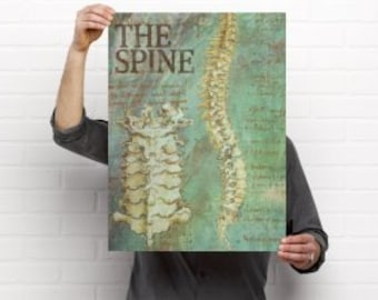 The Spine Chiropractic Anatomy Artwork