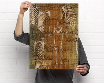 Davinci Drawings Bones Medical Chiropractic Anatomy Artwork