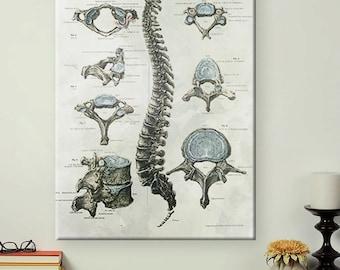 Vintage Chiropractic Art Medical Anatomy Print-