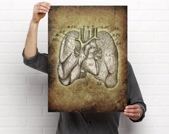 Vintage Lungs Print
