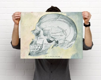 Artistic Watercolor Skull Print