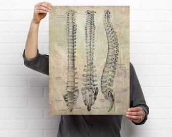 3 View Spine Chiropractic Anatomy Artwork