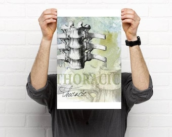 3 piece Cervical Thoracic Lumbar Spine Chiropractic Artwork
