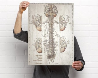Look to the Spine Chiropractic Anatomy Artwork