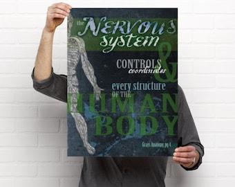 The Nervous System Anatomy Artwork