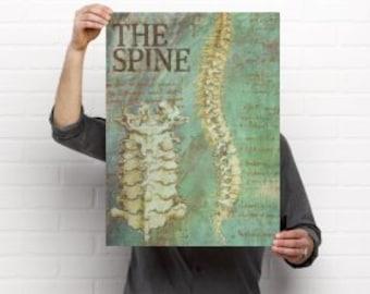 The Spine Chiropractic Anatomy Artwork