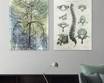 Vintage Dictionary Nerve Roots  Chiropractic Art Medical Anatomy Print-