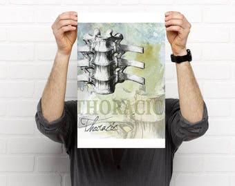 3 piece Cervical Thoracic Lumbar Spine Chiropractic Artwork
