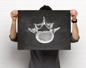 Vertebrae Chalkboard Chiropractic Medical Drawing