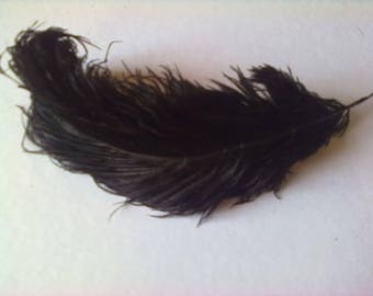 Retro black ostrich feather old curly