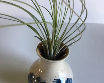 Air Plant in Small Flowered Vase