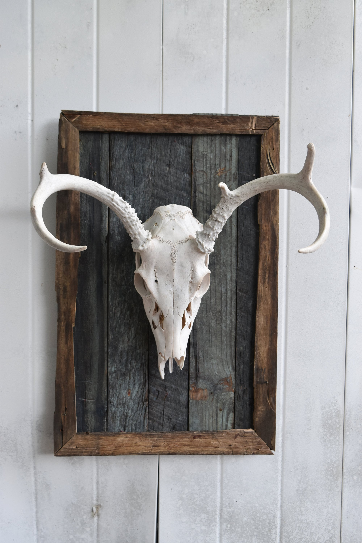 Deer Skull Mounted On Wood Buck Skull European Mount Barn