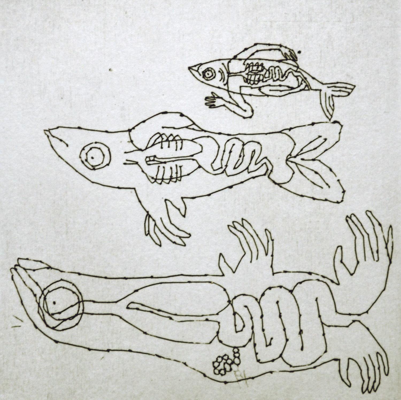 Gravur original Clupeidae Abbildung Fische Anatomie Abbildung | Etsy