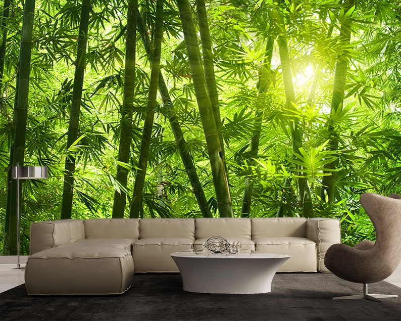 Green Bamboo Forest Sunlight - Large Wall Mural, Self-adhesive Vinyl  Wallpaper, Peel & Stick fabric wall decal