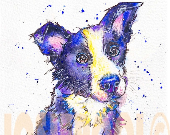 BORDER COLLIE PRINT Picture Dog Painting Puppy Hound of Original Watercolour Painting Watercolor Art Sheepdog Picture by Josie P.