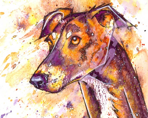 GREYHOUND PRINT of Original Watercolour Dog Painting. Watercolor Art Picture of Sight Hound Lurcher Pup by Josie P.