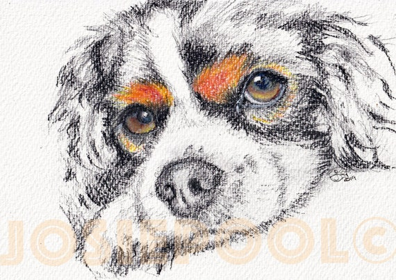 King Charles CAVALIER SPANIEL Print Picture of Original Watercolour Dog Painting Watercolor Puppy Hound Art by Josie P.