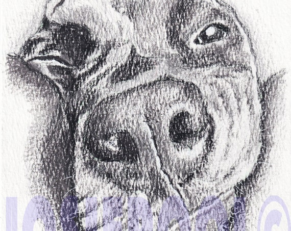 GREAT DANE PRINT from Pencil Drawing, Puppy Art Gift, Animal Illustration, Dog Portrait, Wall Hanging, Pet Memory, Dog Lover, Picture.