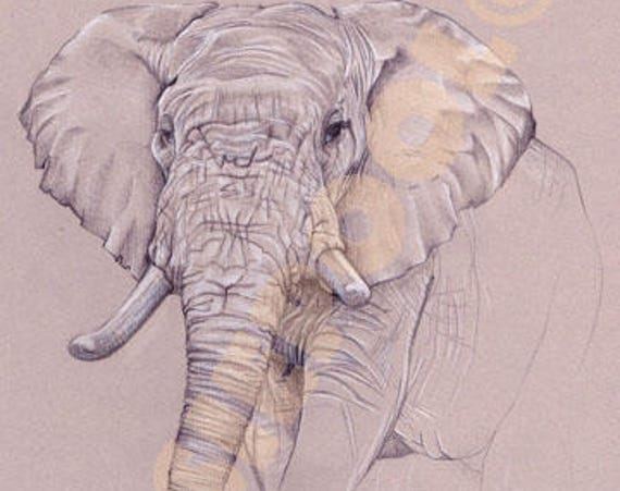ELEPHANT PRINT Picture Painting Print of Original Pastel Painting Art Sketch Drawing  by Hannah Payne BA Hons.