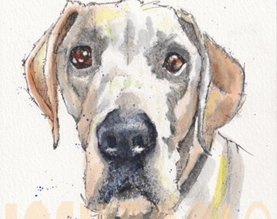 GREAT DANE PRINT of Original Watercolour & Ink Dog Painting. Watercolor Art Picture of Hound Dog Pup by Josie P.