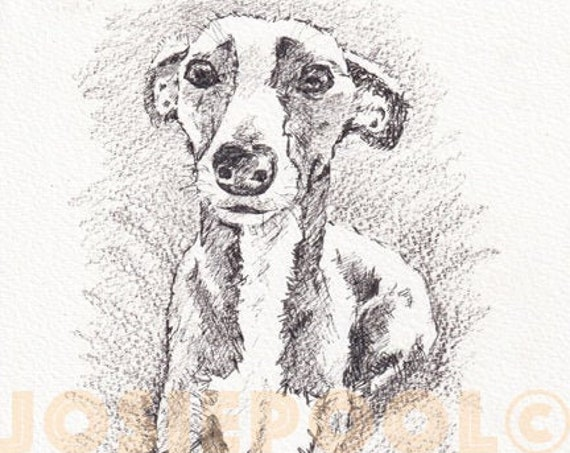 WHIPPET PRINT of Original Graphite Pencil Drawing Puppy Dog Art Gift Illustration Portrait Wall Hanging Pet Memory by Josie P. JaPeyArt