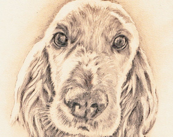 Cocker SPANIEL Dog PRINT from Original Pencil Drawing Painting by Josie P.