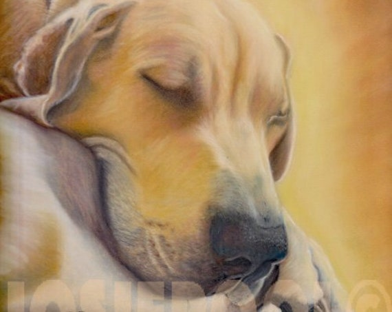 GREAT DANE PRINT of Original Pastel Dog Painting Art Picture Hound Pup by Josie P.