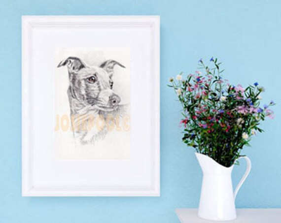 WHIPPET PRINT of Original Drawing Picture Dog Art Illustration Artwork Portrait Sighthound Wall Hanging Pet Loss Animal Memory by Josie P.