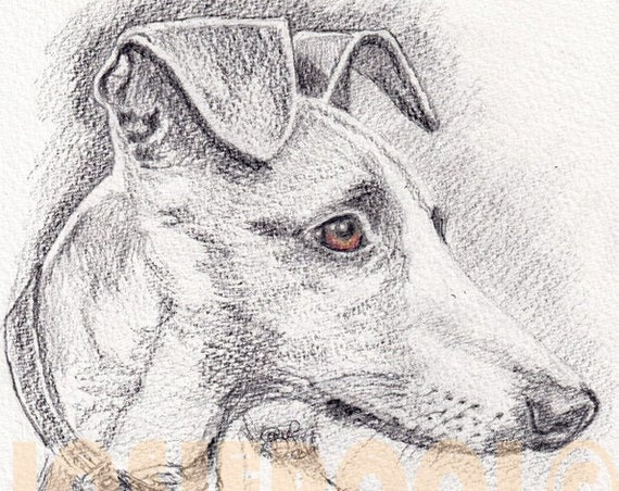 CUSTOM Pet Portraits. FREE Post in UK. Charcoal & Chalk Drawing. Sepia Image. Graphite Pencil Illustration. From your photo. Pet Art.
