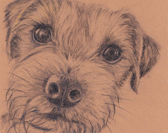 BORDER TERRIER PRINT of Original Graphite Drawing Dog Picture by Josie P.