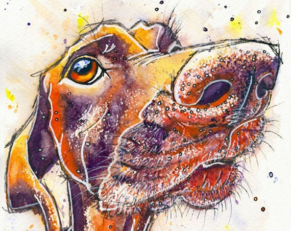 GERMAN POINTER Short Haired, Painting Print of Original Watercolour Dog Picture Art Gift Pup Puppy by Josie P