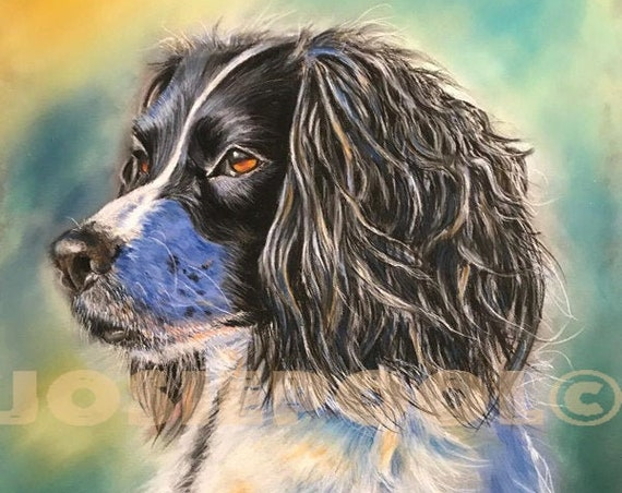 Springer SPANIEL Dog, Art Print, from Original Pastel Painting, Animal Picture, Dog Lovers, Black & White Dog, Animal Gift, Pet Portrait.