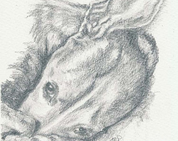 WHIPPET PRINT of Original Pencil Dog Drawing Art Picture of Sight Hound Lurcher Pup  by Josie P.