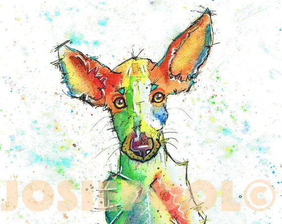 IBIZAN HOUND PRINT of Original Watercolour Dog Painting. Watercolor Art Picture  of Sight Hound Lurcher Pup  by Josie P.