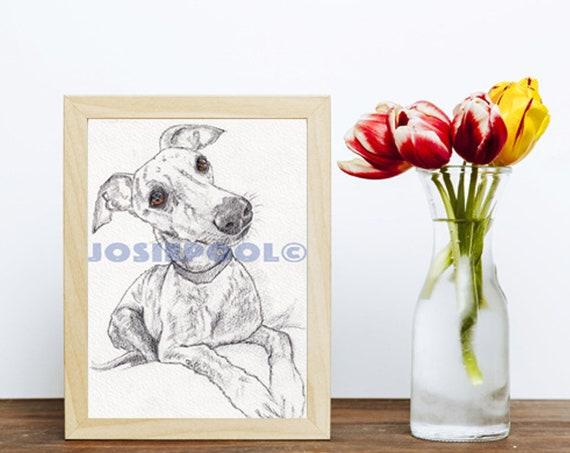 WHIPPET PRINT of Original Graphite Pencil Drawing Dog Puppy Art Gift Illustration Portrait Wall Hanging Pet Memory by Josie P. JaPeyArt