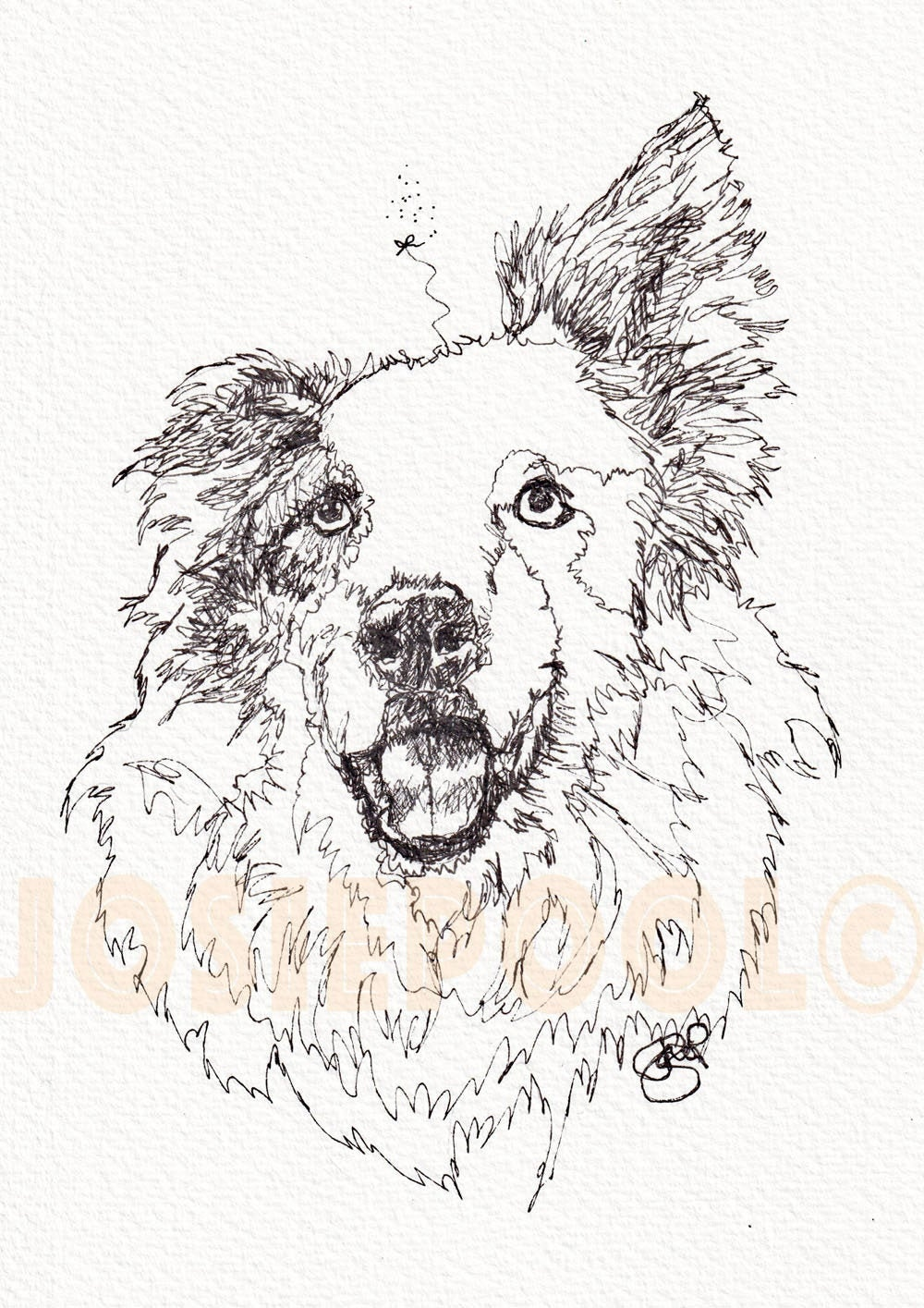 Border Collie Print Picture Dog Painting Of Original Ink