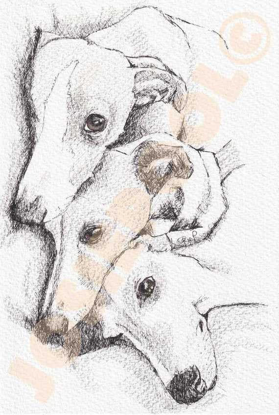 WHIPPET PRINT of Pencil Drawing, Puppy Art Gift, Dog Illustration, Portrait Wall Hanging, Pet Memory, Dog Lover, Mothers Day Present, Gift.