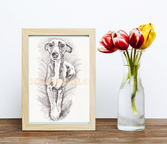 WHIPPET PRINT of Original Drawing Picture Lurcher Dog Painting Wall Art Illustration Artwork Portrait Sketch Sighthound by Artist Josie P