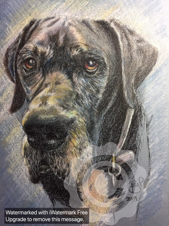 GREAT DANE Dog PRINT of Original Drawing Picture Animal Hound Art by Josie P.