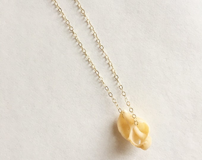 Dainty Seashell Gold Filled Necklace